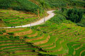 Rice fields on terraced in rainny season at sapa lao cai vietnam prepare for transplant northwest Stock Images