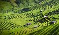 Rice fields on terraced in sunset at Mu Cang Chai, Yen Bai, Vietnam Royalty Free Stock Photo