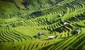 Rice fields on terraced in sunset at Mu Cang Chai, Yen Bai, Vietnam Royalty Free Stock Photo