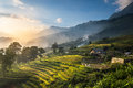 Rice fields on terraced in sunset at Sapa, Lao Cai, Vietnam. Royalty Free Stock Photo