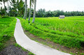 Rice fields walking path, Bali countryside view Stock Image