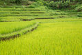 Rice fileds at Vietnam on mountain Royalty Free Stock Photo