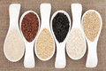 Rice grain selection in white porcelain scoops over hessian background Royalty Free Stock Photos