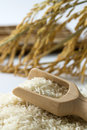 Rice grain with wooden scoop and paddy Royalty Free Stock Photo