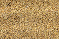 Rice grains Royalty Free Stock Photo