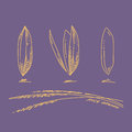 Rice grains, Sketch hand drawn Royalty Free Stock Photo