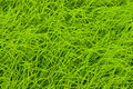 Rice Grass Top View Royalty Free Stock Images