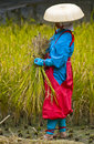 Rice harvest ceremony Royalty Free Stock Photos