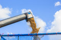 Rice harvesting with combine harvester Royalty Free Stock Images
