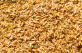 Rice husk on the floor background texture Stock Image