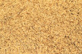 Rice husks of chaff Royalty Free Stock Photo