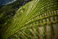 Rice Paddies, China Stock Photo