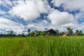 Rice paddy with beautiful clouds Royalty Free Stock Photos