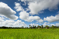 Rice paddy with beautiful clouds Royalty Free Stock Image