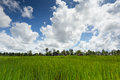 Rice paddy with cumulus clouds Stock Photos