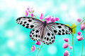 Rice Paper Butterfly Royalty Free Stock Photos