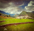 Rice plantations vietnam vintage retro hipster style travel image of field terraces paddy with grunge texture overlaid near cat Stock Photos