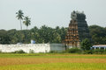 Rice ripening paddies and temple in tamil nadu south india Royalty Free Stock Photography