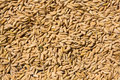 Rice seeds Stock Image