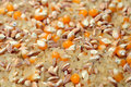 Rice spelt and maize grains closeup Royalty Free Stock Images