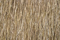 Rice straw background gold vertical abstract texture Stock Image
