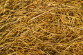 Rice straw close up background in the field after harvesting Royalty Free Stock Images