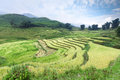 Rice terrace the and hills in the sapa vietnam Royalty Free Stock Images
