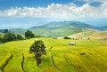 Rice terrace in thailand Stock Photos