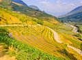 Rice terraced fields in early stage Royalty Free Stock Images