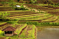Rice terraces Stock Photography