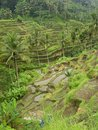Rice terraces in bali filled with water Royalty Free Stock Photos