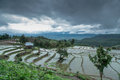 Rice terraces the beautiful scene of in chiang maithailand july Stock Photography