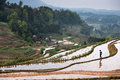Rice terraces and girl a was walking on the which in a small mountain village taken on jiangjin district of chongqing china Stock Images
