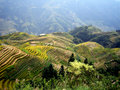 Rice terraces - Guilin - China Stock Photo