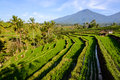 Rice terraces of Jatiluwih, Bali Royalty Free Stock Photo