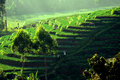 Rice terraces in java field indonesia Stock Photography