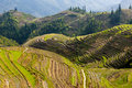 Rice Terraces In Longsheng, Ch...