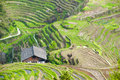 Rice terraces in longsheng china chinese Stock Images