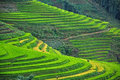 Rice terraces in sapa vietnam greenish fields landscape the mountain of Stock Photography