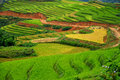 Rice terraces in sapa vietnam greenish fields landscape the mountain of Royalty Free Stock Photo