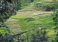 Rice terraces of tana toraja in sulawesi beautiful south indonesia Royalty Free Stock Photo