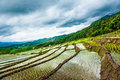 Rice terraces in thailand rice fields on terraced in rainny season at chiang mai and clound Royalty Free Stock Photos