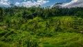 Tegalalang Rice terraces Ubud Bali Royalty Free Stock Photo