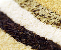 Rice varieties of arranged in rows Royalty Free Stock Photo