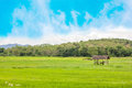 Ricefield beautiful with blue sky and hill background Royalty Free Stock Photography