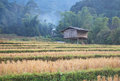 Ricefield big with hut at maklangluang vilage chiangmai Stock Photos
