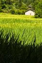 Ricefield landscape near Luoping Royalty Free Stock Images