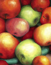 Rich harvest of ripe juicy and tasty apples red green are shown in oil on canvas art illustration Stock Photos