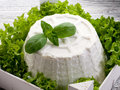 Ricotta with basil e lettuce Royalty Free Stock Image