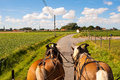 Ride through the flemish fields with horse and covered wagon Stock Photography